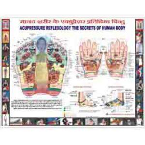 reflexology-chart-hindi